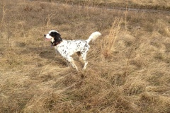 hunting-December-2011-3